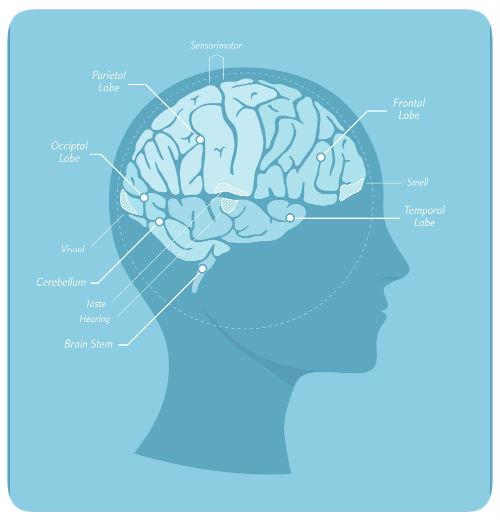 stress response brain